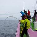 65 kg Schwertfisch an der Angel fordern.