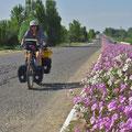 Zur Abwechslung mal Blumen auf der eintönigen Strecke nach Taschkent.