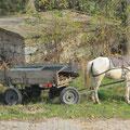 Auch in Edirne sind Roma mit Pferdewagen unterwegs