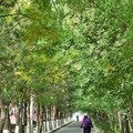 Toll in China: separate Wege für Roller und Velos.