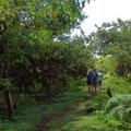 Unterwegs auf der Insel Isabela.
