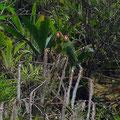 Leider sind die Papageien sehr scheu. Haben sie nicht grösser fotografieren können.