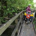 Der Wilderness Trail führt hier ein Stück entlang eines Wasserkanals durch den Wald.