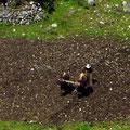 Feldarbeit mit Kühen und Holzpflug, das sehen wir öfter.