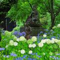 Hortensien blühen in allen Farben.