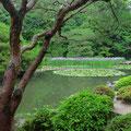 Die wunderschön angelegten Gärten in Japan sind legendär.