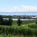 Bodensee und hinten die Schweizer Alpen.