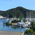 Picton hat einen hübschen, kleinen Hafen.