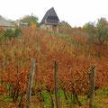 Kurz vor der Donau sehen wir die ersten kleinen Weinberge.