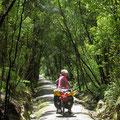 Auf dem West Coast Wilderness Trail, beim Lake Manihapua.
