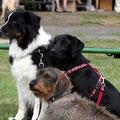 Lenny, Emma bei ihrem ersten Turnier und Alwin