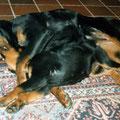 Bella und Iwan