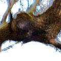 woodenghost2