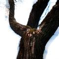 woodenghost3