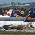 Wiese der Kranichvögel, Flughafen München (Foto: Uwe Kragl)