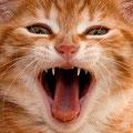 Katze (Foto: Hans Werner Lehner)