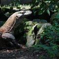 Komodowaran im Zoo von Surabaya