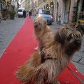 """""""La diva"""" Jolie et son chouchou Erasmus sur le tapis rouge en Italie / """"Diva"""" Jolie und ihr Schatz Erasmus auf dem roten Teppich in Italien"""