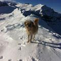 Grisou, die Schweizer Berge sind meine Heimat