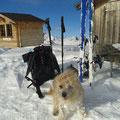 Dumpy nach bestandener Lawinenhundprüfung 3, Dumpy après le teste de chien d'avalanche niveau 3