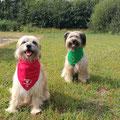Fanouk (rouge) et Happy les deux dogdancer / Fanouk und Happy die zwei Tänzer.  Fanouk à participé au championat du monte en Hollande / Fanouk hat an der WM in Holland teilgenommen = félicitation!!!