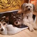 Minou et ses amis / Minou und ihre Freunde