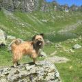 Toya Sommerwanderung beim Chüebodesee / Toya profite du rando en alpage