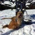 Toya's 1. Skitour / le premier tour de ski pour Toya