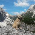 Fanouk verbringt Ferien in den Dolomiten