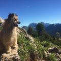 Toya: ich liebe die Schweizer Berge / j'adorre les montagnes Suisses