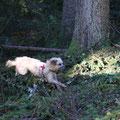 Sira à l'entraînment de chien de sanitaire