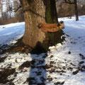 Toya gibt Gas = Uebung Baum