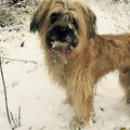 Aramis, erster Schnee in Bayern