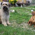 Grisou, le gigolo italien et sa Carlotta / Grisou der italienische Gigolo und seine Carlotta