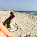 Aramis genisst das Strandleben / Aramis profite de la plage