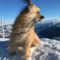 "Toya ""emportée par le vent"" / Toya vom Winde vrerweht"