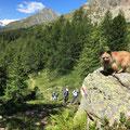 Toya au coeur des montagnes Suisse / Toya liebt die Berge