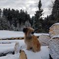 Jill aime les promenades hivernales / Jill liebt ausgedehnte Spaziergänge im Schnee