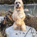 Fanou geniesst seinen Geburtstag bei einem schönen Spaziergang. Fanou profite pour son anniversaire  d'une belle prommenad