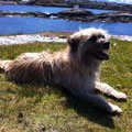 Sira geniesst ihre Ferien in Norwegen / Sira profite de ses vacances en Norvège