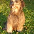 Gilly geniesst die Ferien am Murtensee / Gilly profite des vacances au lac de Morat