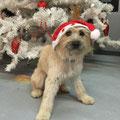 Lola nous souhaite un Joyeux Noël