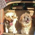 Fanou nimmt Abschied von seiner Blindenhundefreundin Iffy, das Jahr ist um und für Iffy beginnt der Ernst des Lebens
