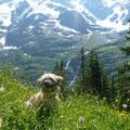 Sira auf der Alp