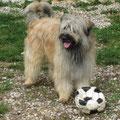 Grisou der Fussballer / Grisou le footballeur