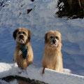 Happy + Fanouk erster Schnee 2015 / 1er neige 2015