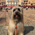 Jeep adore les vacances en Toscane: belles balades et le dolce far niente