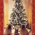 L'Oô et ses copines nous souhaitent un Joyeux Noël / l'Oô und ihre Freundinnen wünschen Frohe Weihnachten