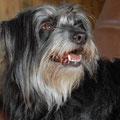 Grisette, la superbe chienne de pistage / Grigi liebt es Fährten zu suchen
