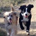 Fanou feiert Geburtstag mit seiner Freundin Liska, Liska ist Blindenjunghund in Ausbildung.